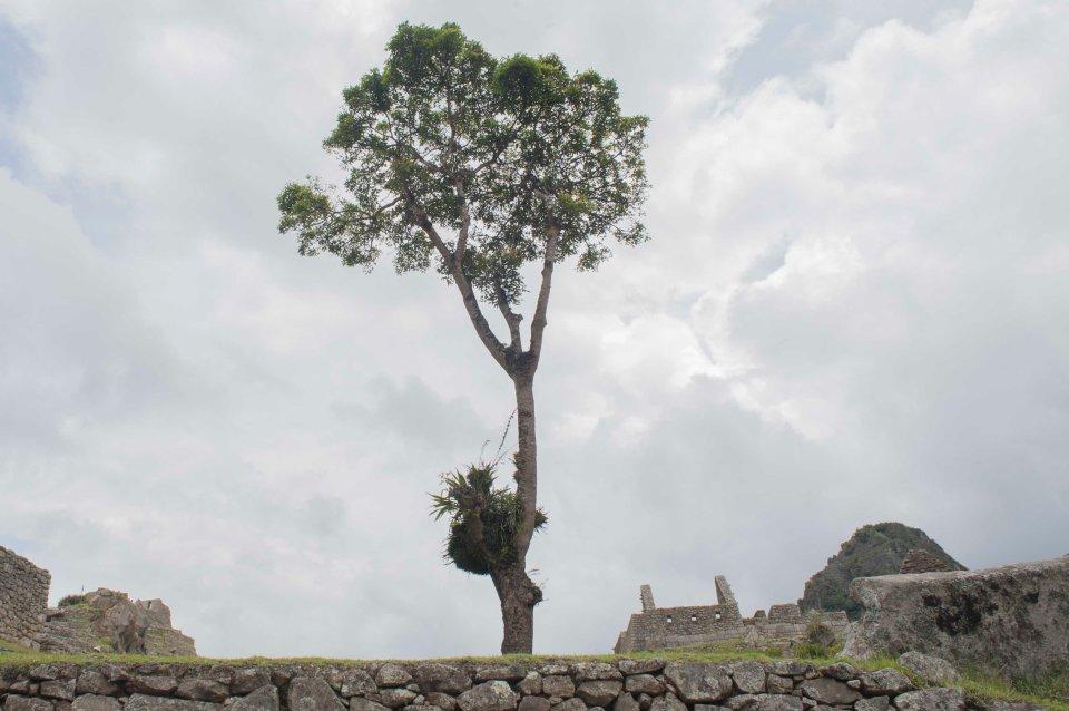 Machu Picchu-40